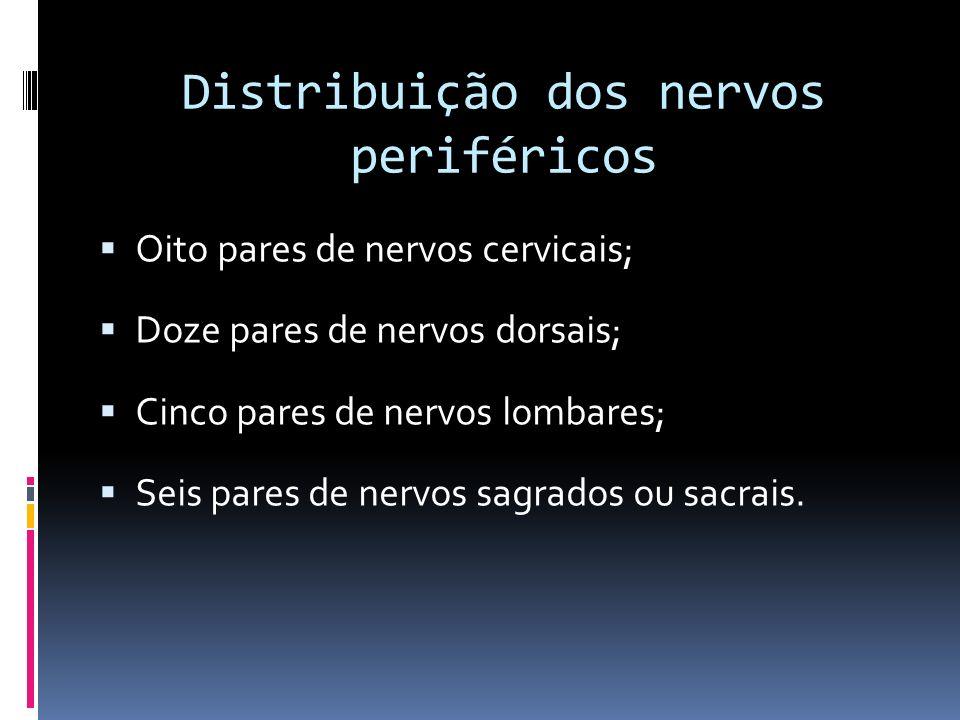 Distribuição dos nervos periféricos
