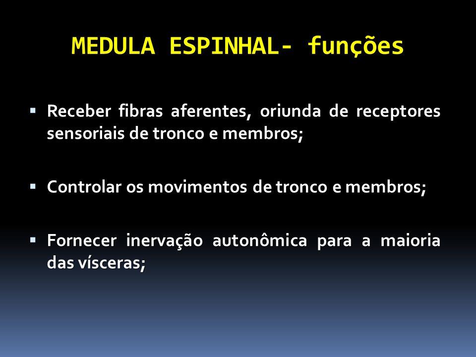 MEDULA ESPINHAL- funções