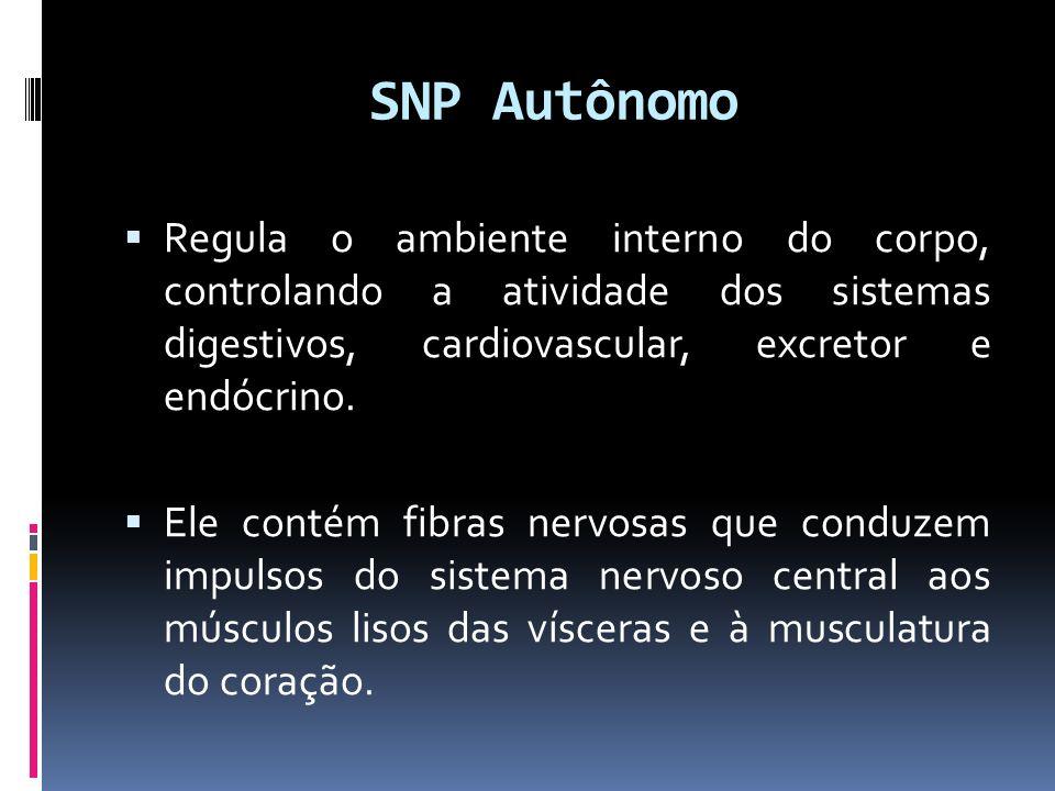 SNP Autônomo Regula o ambiente interno do corpo, controlando a atividade dos sistemas digestivos, cardiovascular, excretor e endócrino.