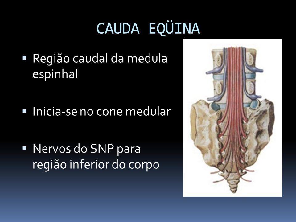 CAUDA EQÜINA Região caudal da medula espinhal