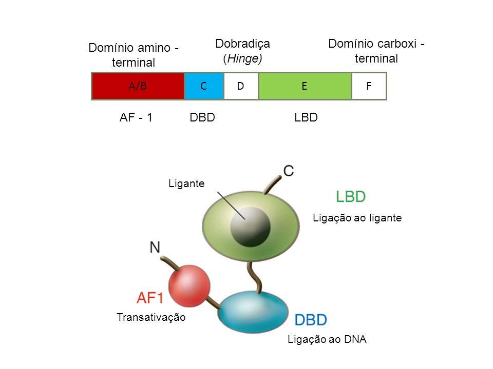 Domínio carboxi - terminal Domínio amino - terminal