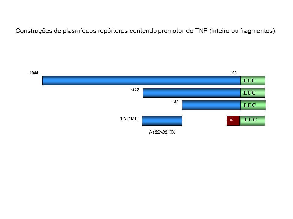 Construções de plasmídeos repórteres contendo promotor do TNF (inteiro ou fragmentos)