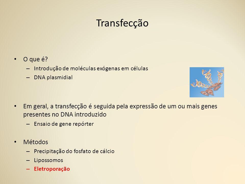 Transfecção O que é Introdução de moléculas exógenas em células. DNA plasmidial.