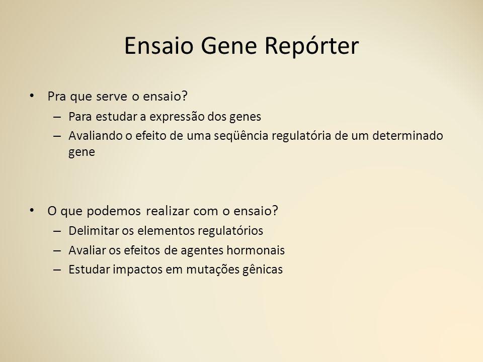 Ensaio Gene Repórter Pra que serve o ensaio