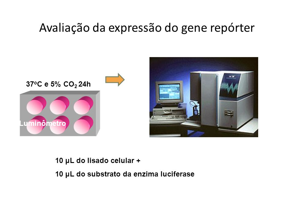 Avaliação da expressão do gene repórter
