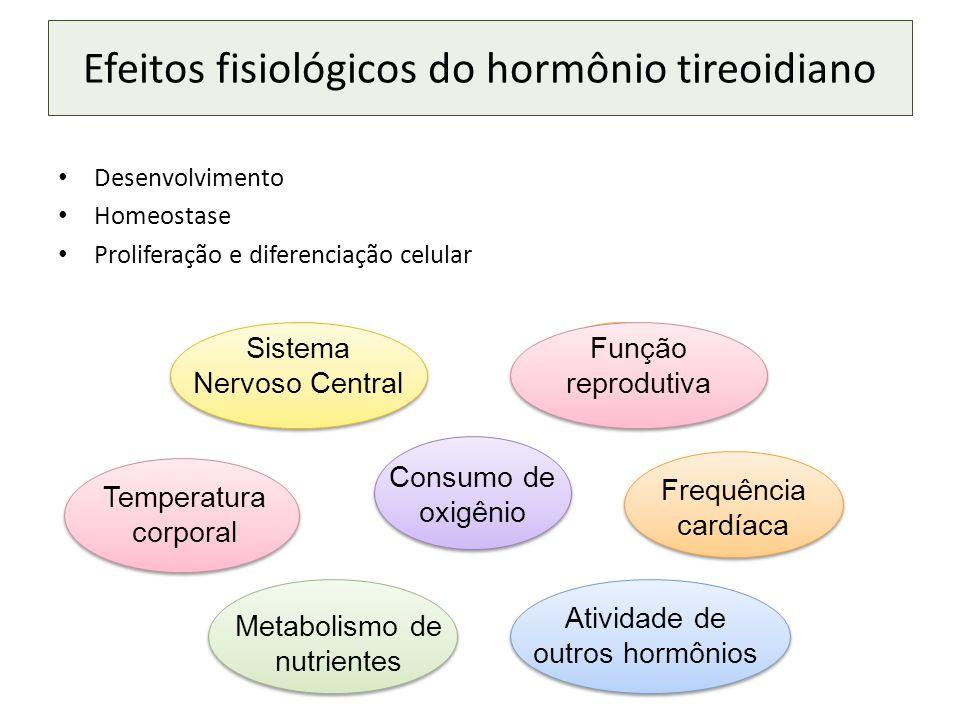 Efeitos fisiológicos do hormônio tireoidiano
