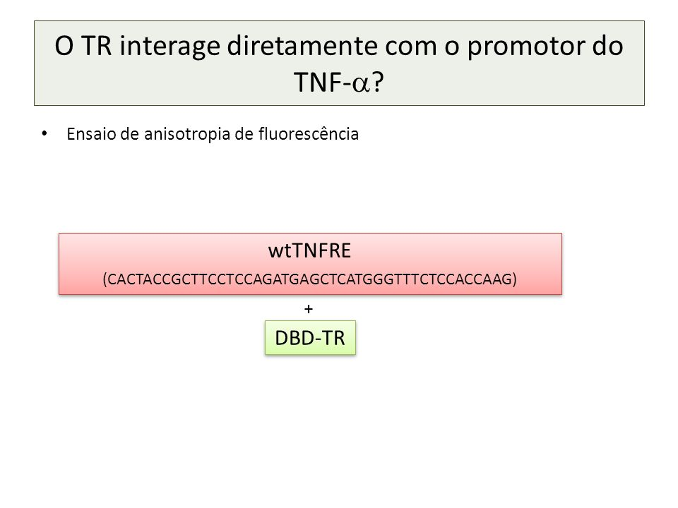 O TR interage diretamente com o promotor do TNF-