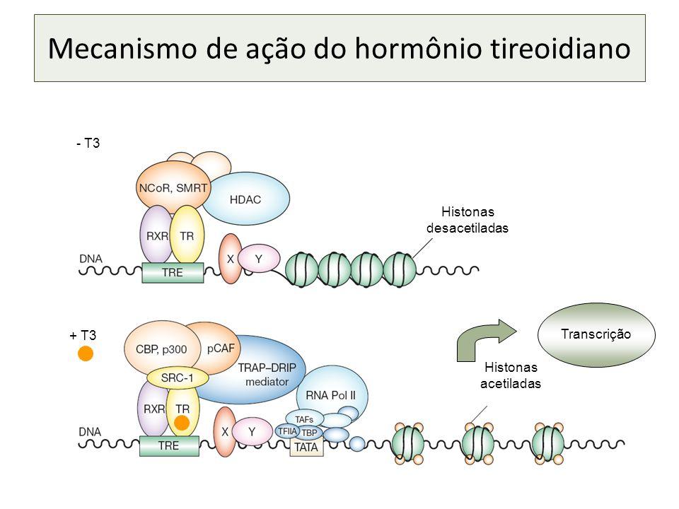 Mecanismo de ação do hormônio tireoidiano