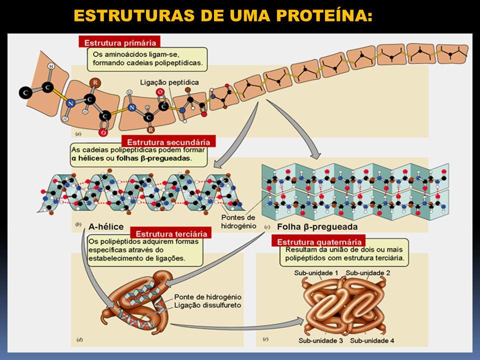 ESTRUTURAS DE UMA PROTEÍNA: