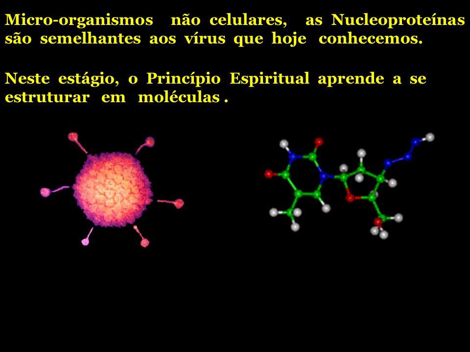 Micro-organismos não celulares, as Nucleoproteínas são semelhantes aos vírus que hoje conhecemos.