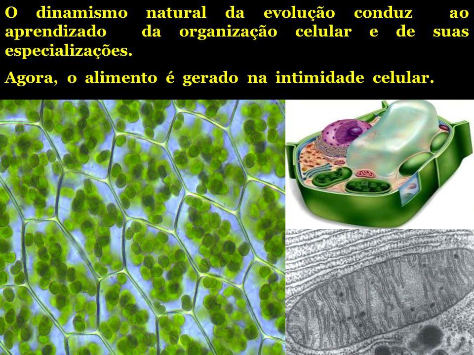 O dinamismo natural da evolução conduz ao aprendizado da organização celular e de suas especializações.