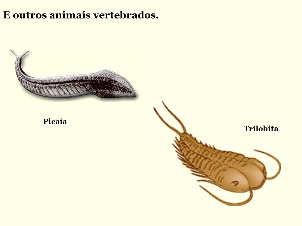 E outros animais vertebrados.