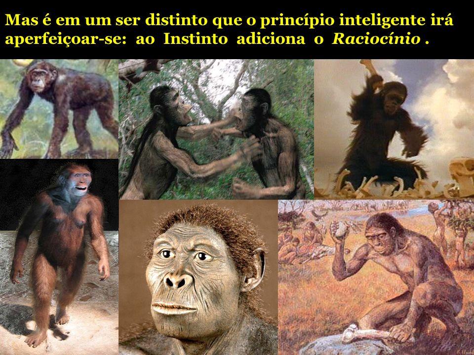 Mas é em um ser distinto que o princípio inteligente irá aperfeiçoar-se: ao Instinto adiciona o Raciocínio .