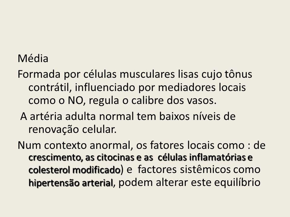 Média Formada por células musculares lisas cujo tônus contrátil, influenciado por mediadores locais como o NO, regula o calibre dos vasos.