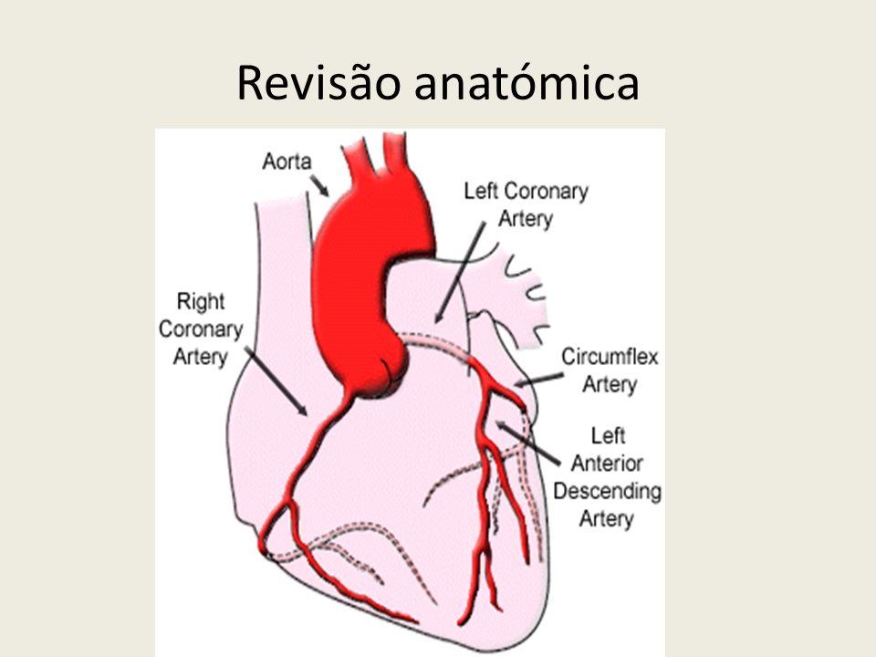 Revisão anatómica