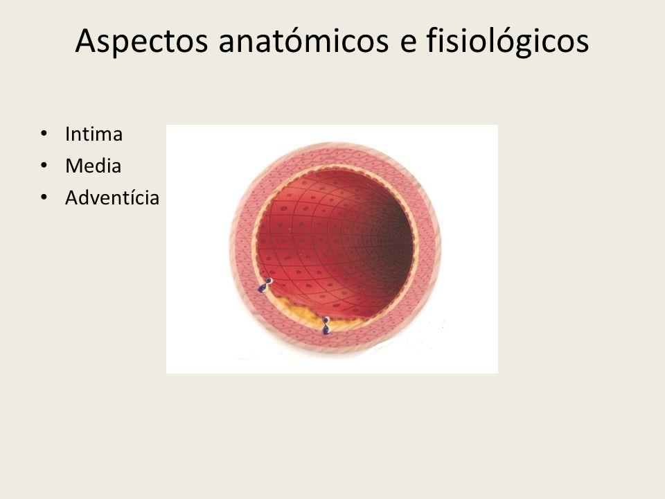 Aspectos anatómicos e fisiológicos