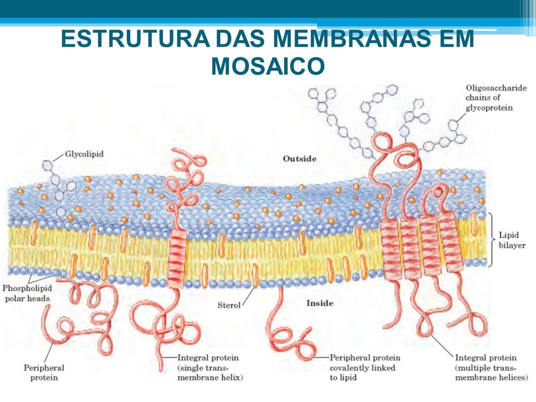 ESTRUTURA DAS MEMBRANAS EM MOSAICO