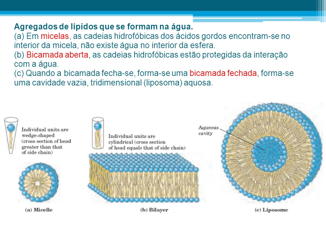 Agregados de lípidos que se formam na água.