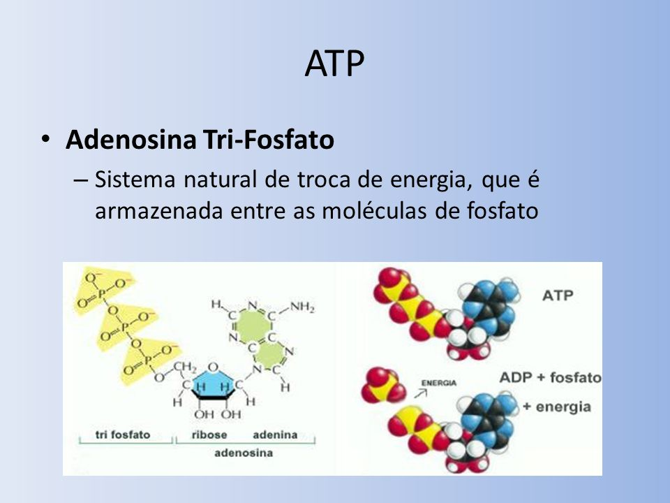 ATP Adenosina Tri-Fosfato