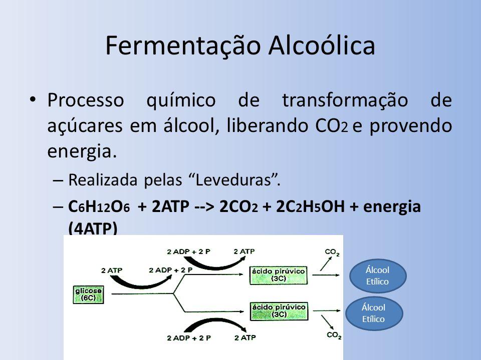 Fermentação Alcoólica