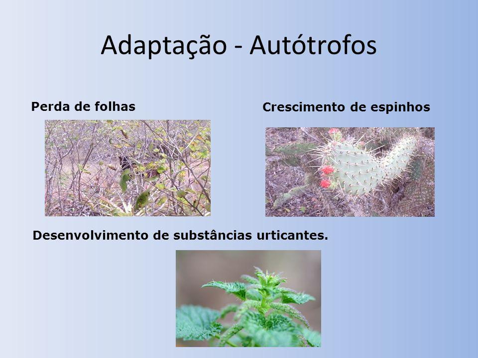 Adaptação - Autótrofos