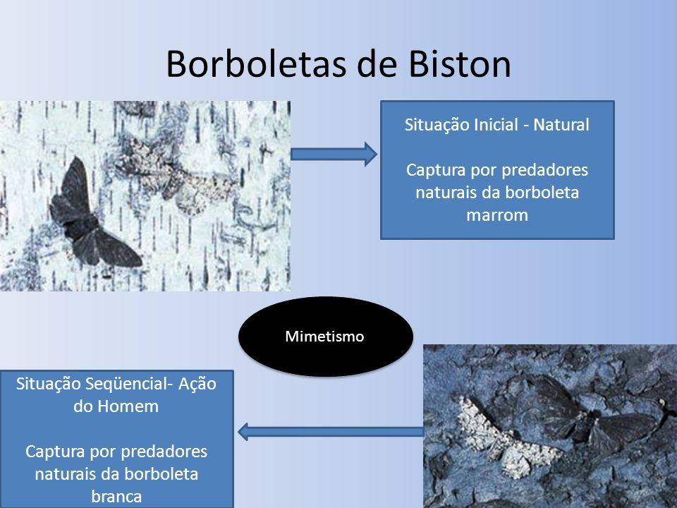 Borboletas de Biston Situação Inicial - Natural