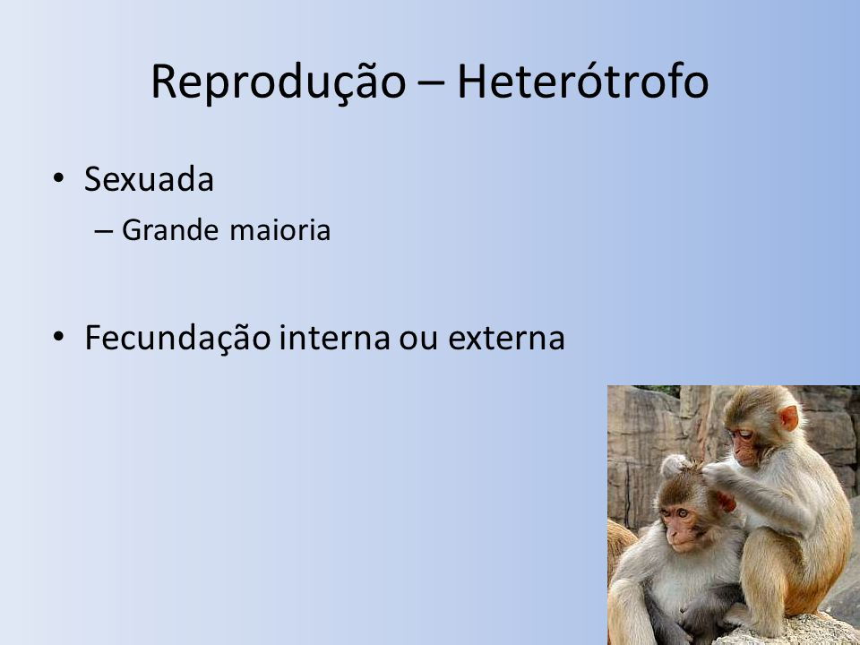Reprodução – Heterótrofo