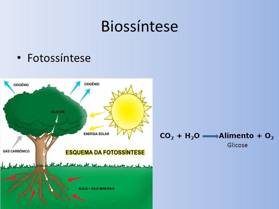 Biossíntese Fotossíntese CO2 + H2O Alimento + O2 Glicose