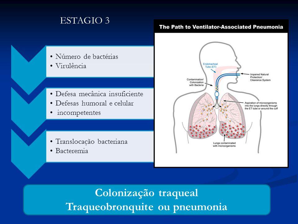 Traqueobronquite ou pneumonia