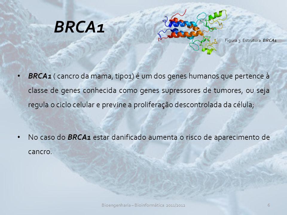 Bioengenharia – Bioinformática 2011/2012
