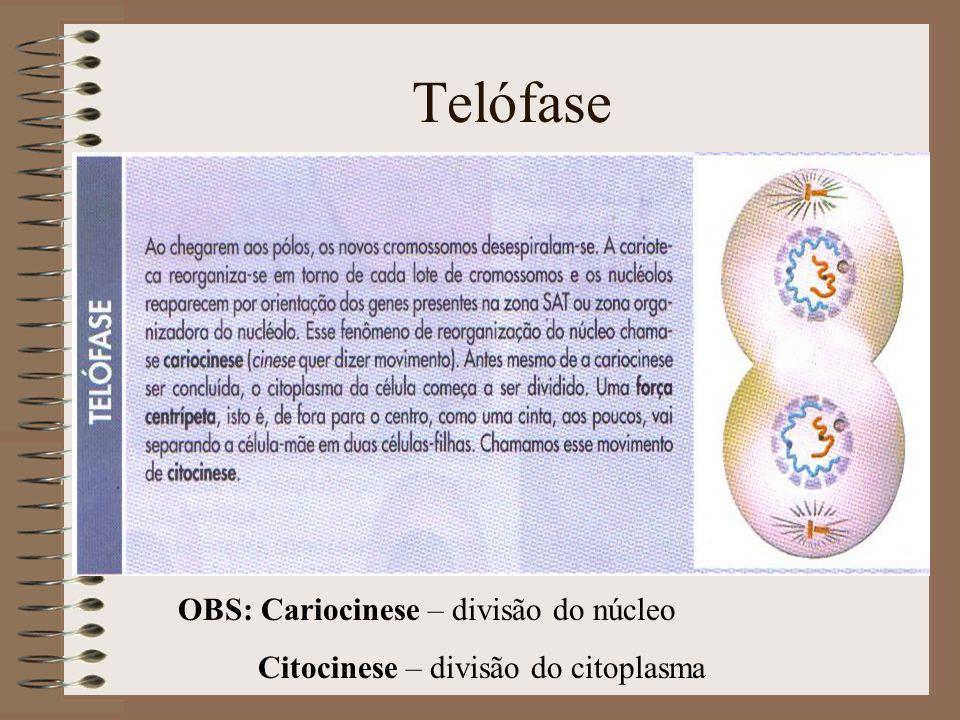 Telófase OBS: Cariocinese – divisão do núcleo