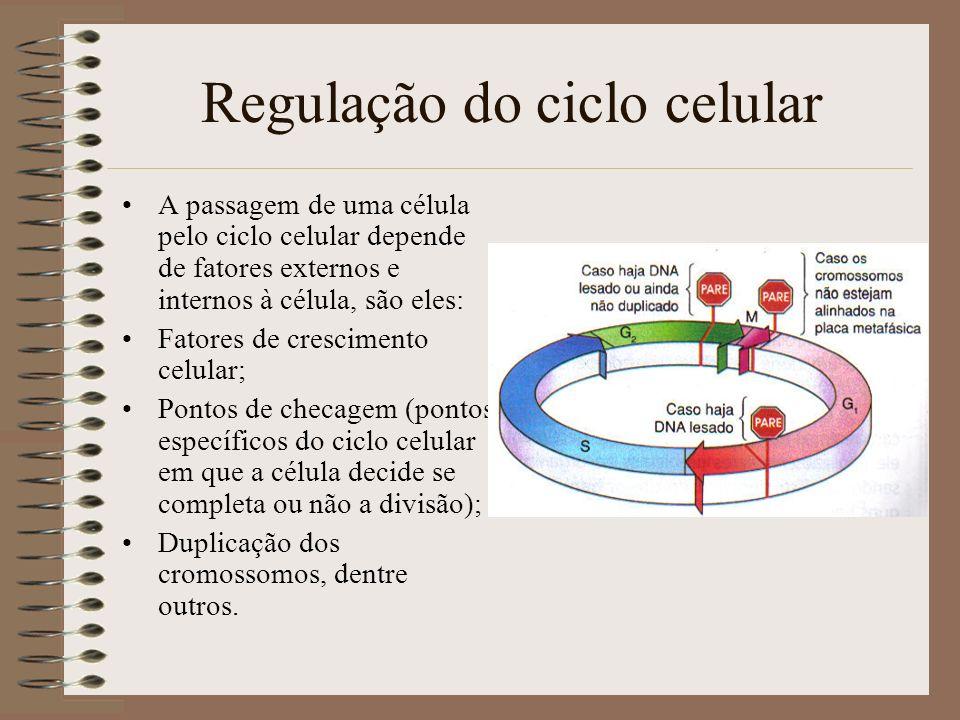 Regulação do ciclo celular