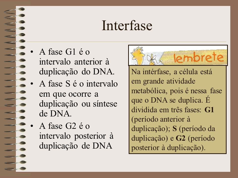 Interfase A fase G1 é o intervalo anterior à duplicação do DNA.