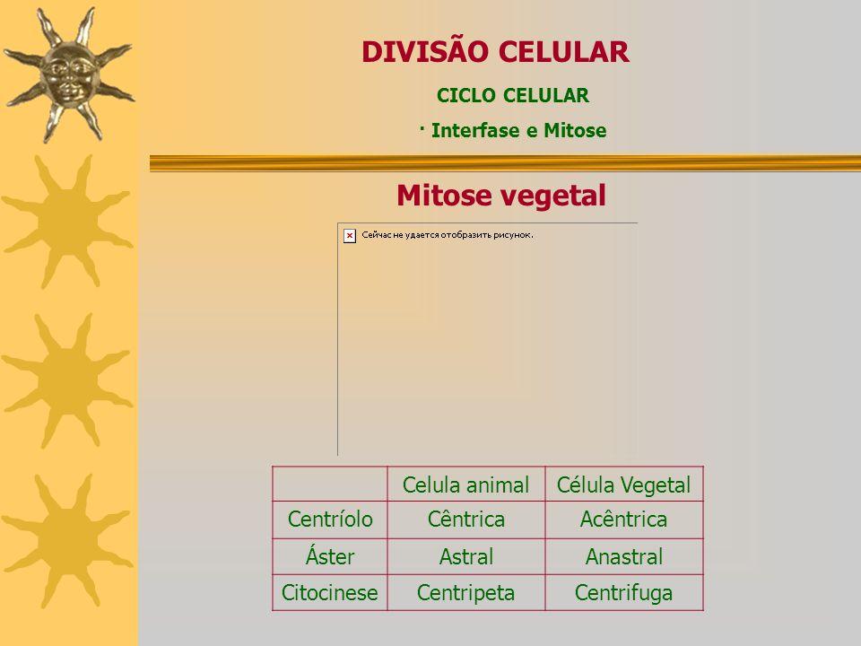 DIVISÃO CELULAR Mitose vegetal Celula animal Célula Vegetal Centríolo