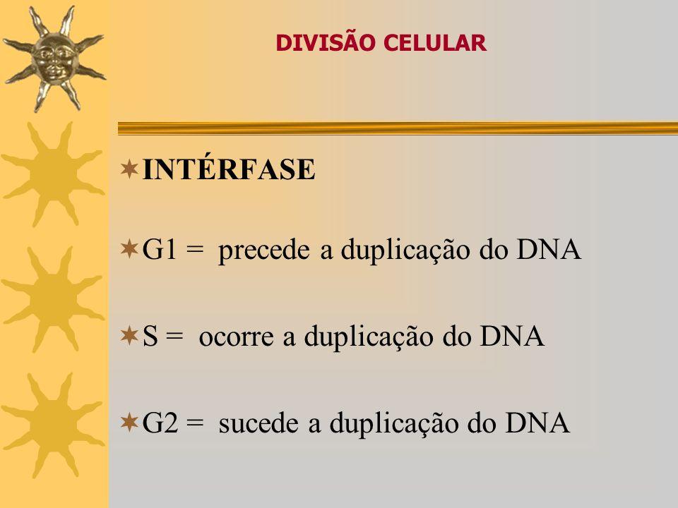 G1 = precede a duplicação do DNA S = ocorre a duplicação do DNA