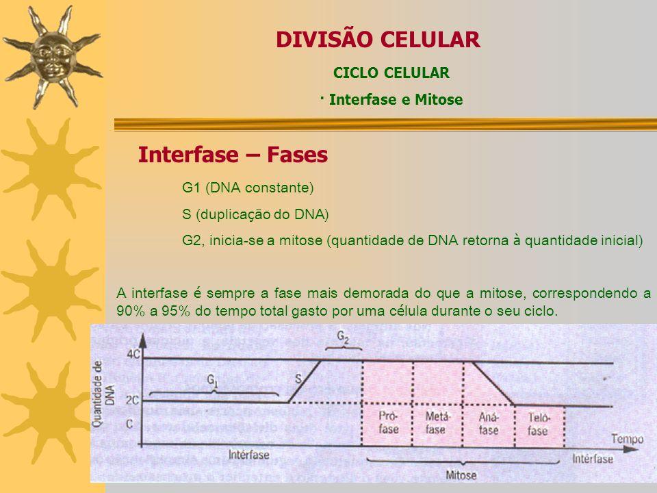 DIVISÃO CELULAR Interfase – Fases CICLO CELULAR · Interfase e Mitose