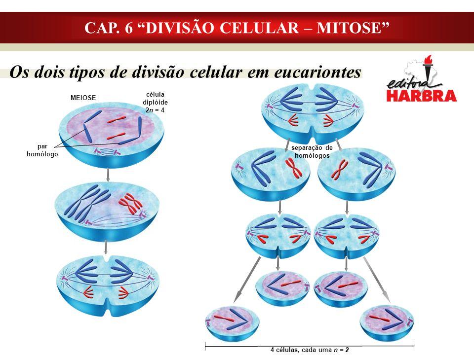 CAP. 6 DIVISÃO CELULAR – MITOSE separação de homólogos