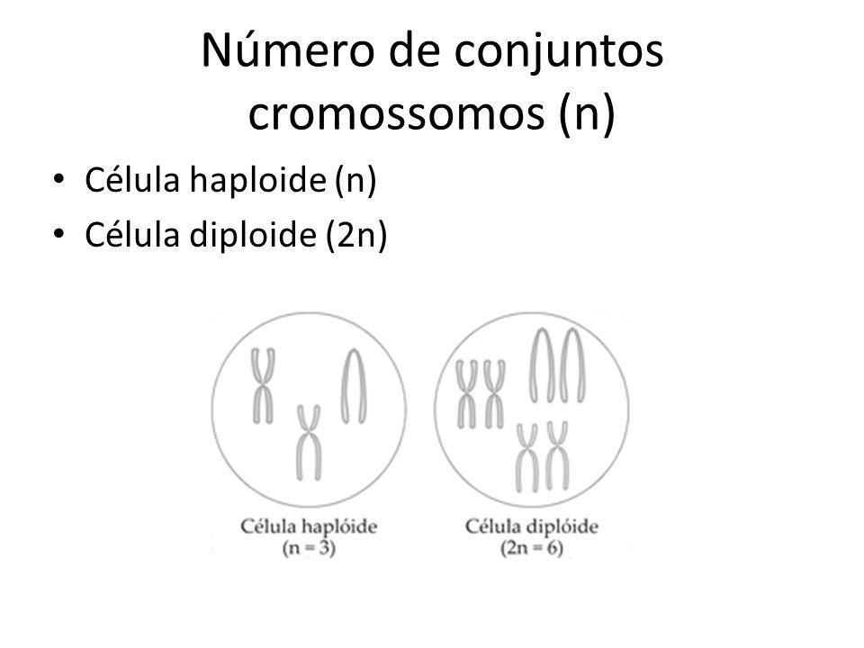 Número de conjuntos cromossomos (n)