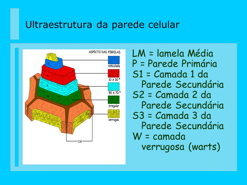 Ultraestrutura da parede celular