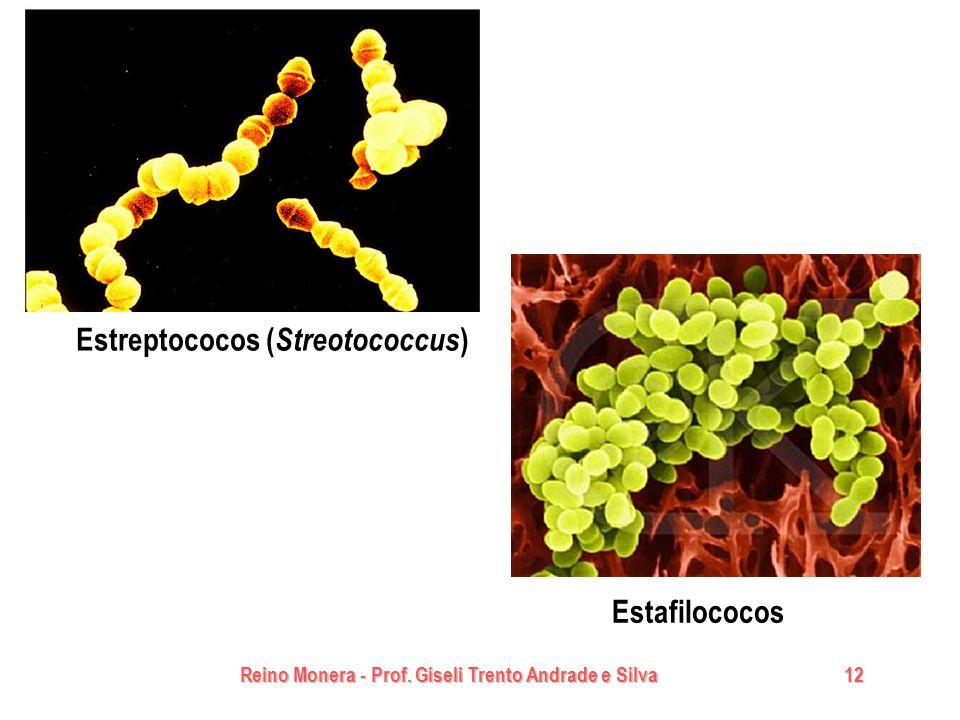 Estreptococos (Streotococcus)