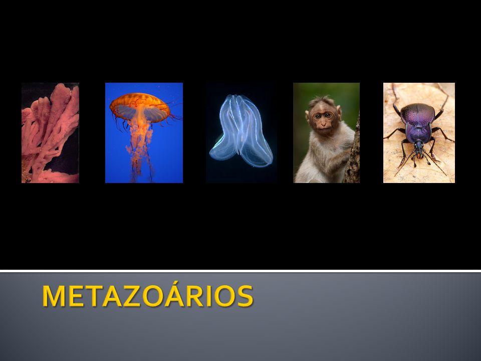 METAZOÁRIOS