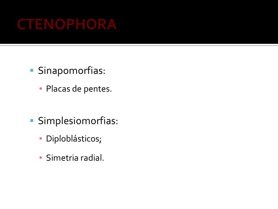CTENOPHORA Sinapomorfias: Simplesiomorfias: Placas de pentes.