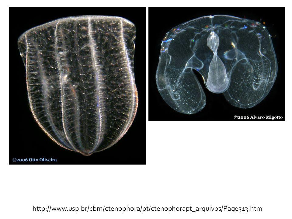 http://www. usp. br/cbm/ctenophora/pt/ctenophorapt_arquivos/Page313