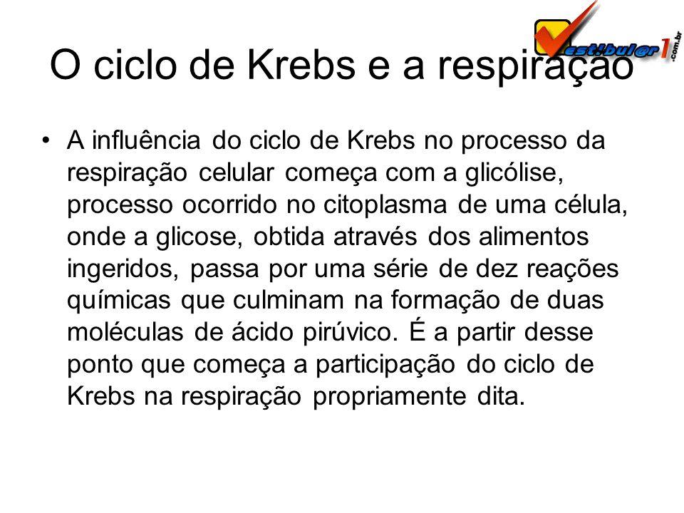 O ciclo de Krebs e a respiração
