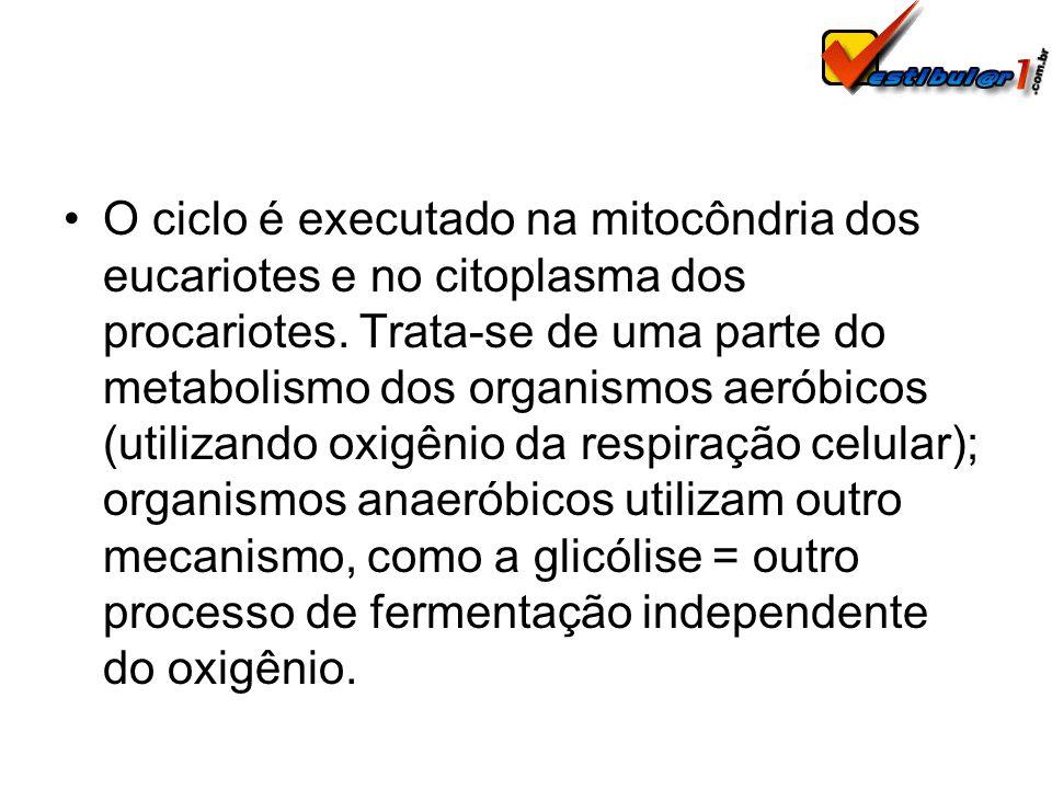 O ciclo é executado na mitocôndria dos eucariotes e no citoplasma dos procariotes.
