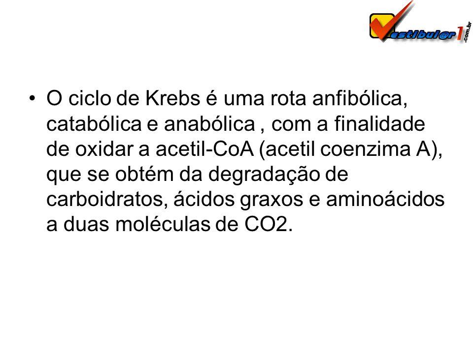 O ciclo de Krebs é uma rota anfibólica, catabólica e anabólica , com a finalidade de oxidar a acetil-CoA (acetil coenzima A), que se obtém da degradação de carboidratos, ácidos graxos e aminoácidos a duas moléculas de CO2.
