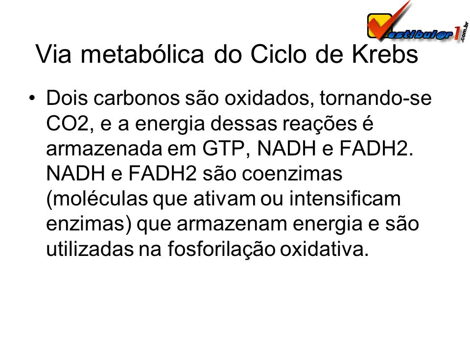Via metabólica do Ciclo de Krebs