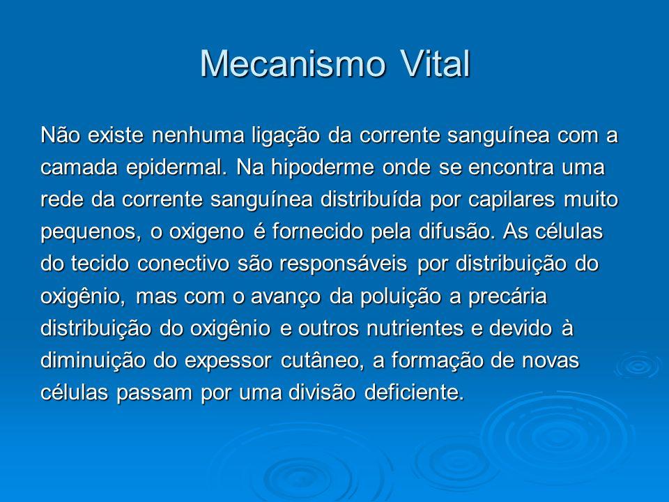 Mecanismo Vital Não existe nenhuma ligação da corrente sanguínea com a