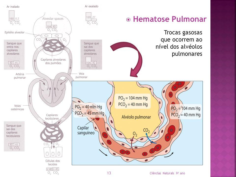 Hematose Pulmonar Trocas gasosas que ocorrem ao nível dos alvéolos pulmonares.