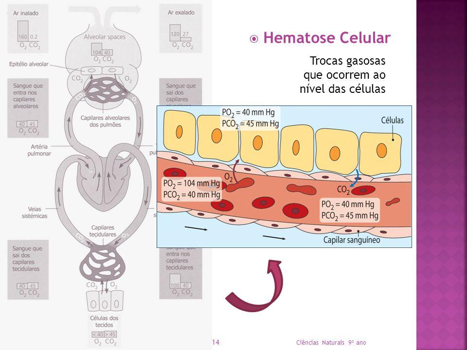 Hematose Celular Trocas gasosas que ocorrem ao nível das células